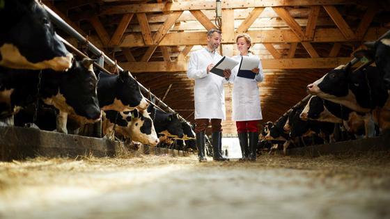 Moderne Landwirtschaft: Eine Frau und ein Mann, beide tragen weiße Laborkittel und Gummistiefel, stehen in einem Kuhstall. Beide haben ein Klemmbrett mit Papieren in der Hand.
