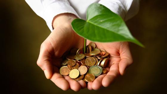 Pflanze wächst in Hand mit Geldmünzen