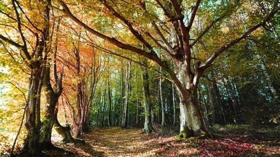 Junge und ältere belaubte Bäume in einer Waldlichtung