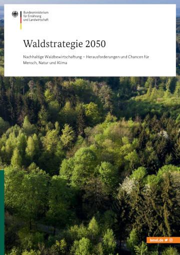 Обкладинка брошури «Лісова стратегія 2050»