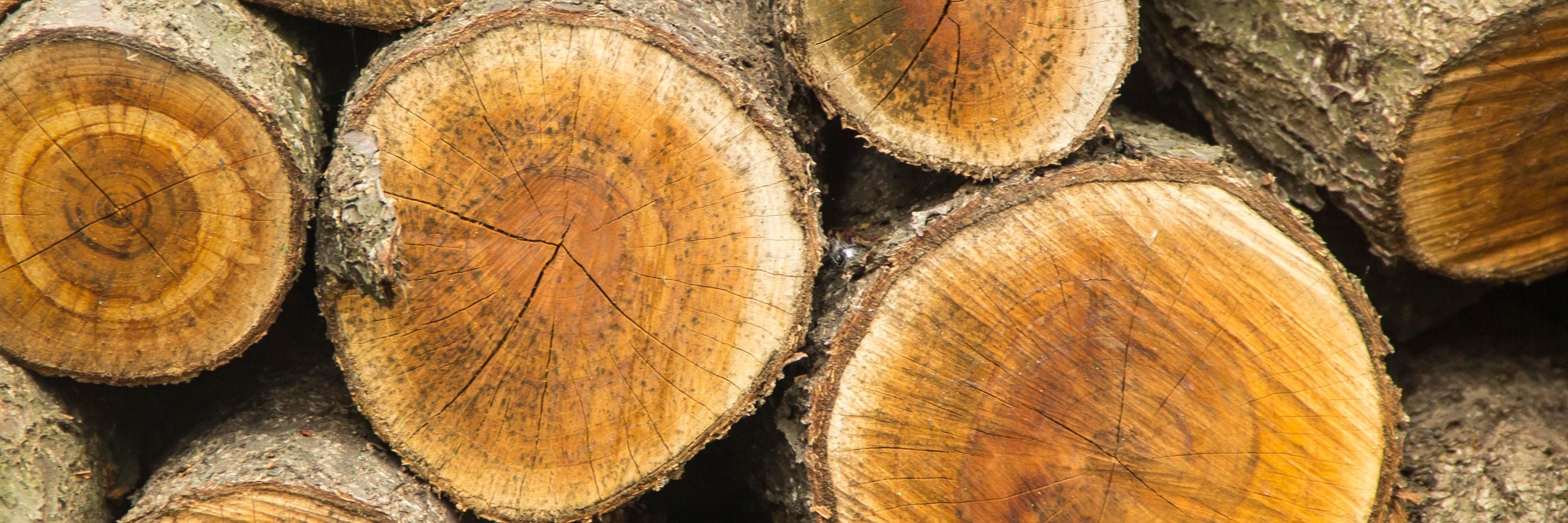 BMEL   Holz