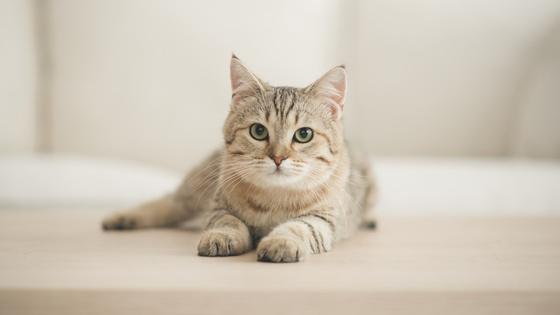 Bmel Pressemitteilungen Meldepflicht Fur Corona Infektionen Bei Haustieren