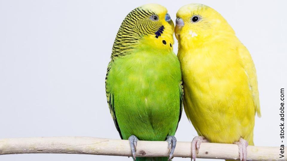 Im urlaub vögeln Meine Stiefmutti