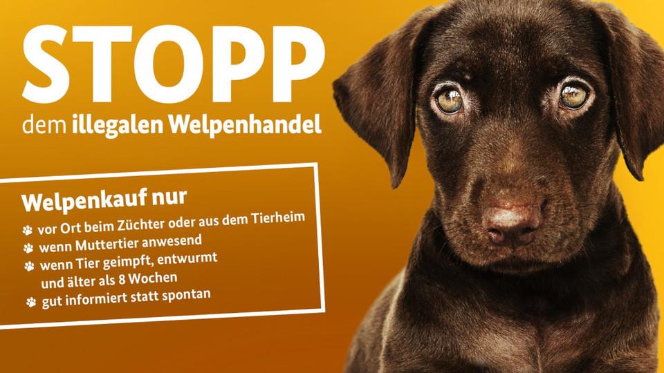 trauriger Hund mit Schriftzug Stopp dem illegalen Welpenhandel