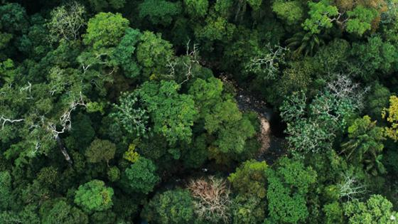 Rain forest from a bird's eye perspective