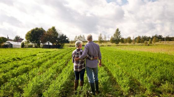 A senior couple is standing in a vegetable field, their backs to the camera