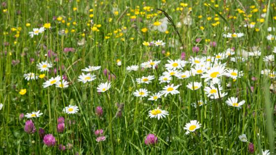 A colourful flower meadow