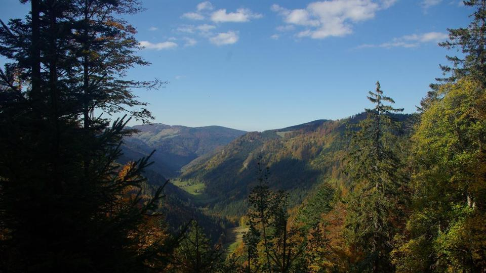 View into a forested valley