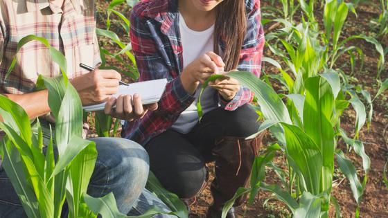 A woman and a man examine plants in a field.